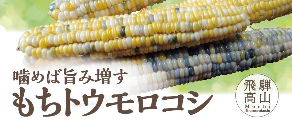 もちトウモロコシ20本