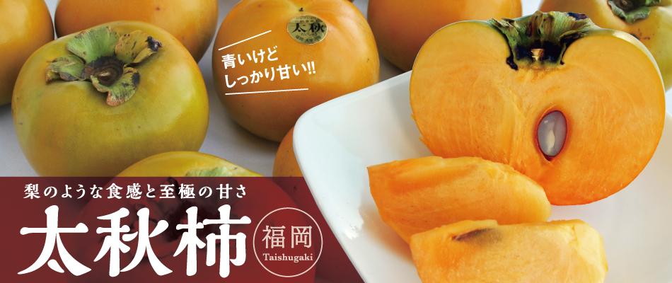 太秋柿2㎏